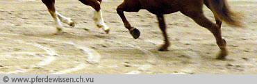 gähnt ein pferd vor schmerzen