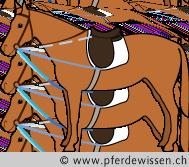 dreiecker (27K)